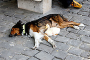 Adorable Duck and Dog duo spotted Napping Together In Paris<br /> <br /> In a strange but adorable twist of fate, two Reddit users recently discovered that they had taken photos of a cute pair of duck and dog friends at almost the same time and almost the same place – Paris.<br /> <br /> First, Reddit user gmwdrumbum posted a photo of a dog and a duck napping together in the streets of Paris that they had taken 4 years and 2 months ago. Later, Reddit user bettythedinosaur realized that they had taken a photo of the same pair roughly 4 years ago as well, a month or two apart. Hopefully, the unexplained dog-duck duo is safe and sound to this day!<br /> ©Exclusivepix