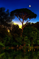 """Sunset moon shining over pine tree at Villa Borghese – Rome""…<br />