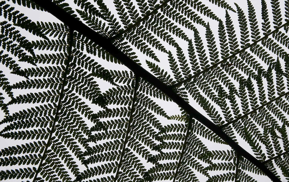 Tree Fern Design