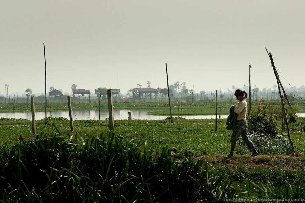Agricultural fields and housing on the outskirts of Phnom Penh, Cambodia.