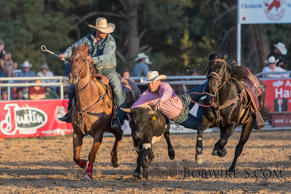 Steer wrestler Buck Rinehart makes his run during the second performance of the Elizabeth Stampede on Saturday, June 2, 2018.