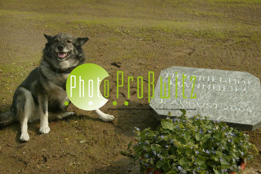 Mannheim. Neckarau Er&ouml;ffnung Tierfriedhof<br /> <br /> Bild: Markus Pro&szlig;witz