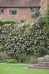 Roses on the walls at Sissinghurst Castle Garden