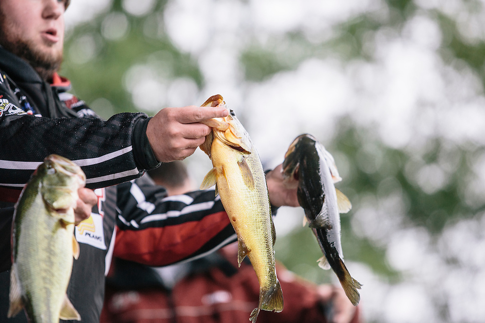 Competitors show off their catch to the crowd during weigh in after the FLW College Fishing Northern Conference Invitational in Marbury, MD on Oct. 11, 2014. Only the top 15 of 43 teams moved on to Sunday.