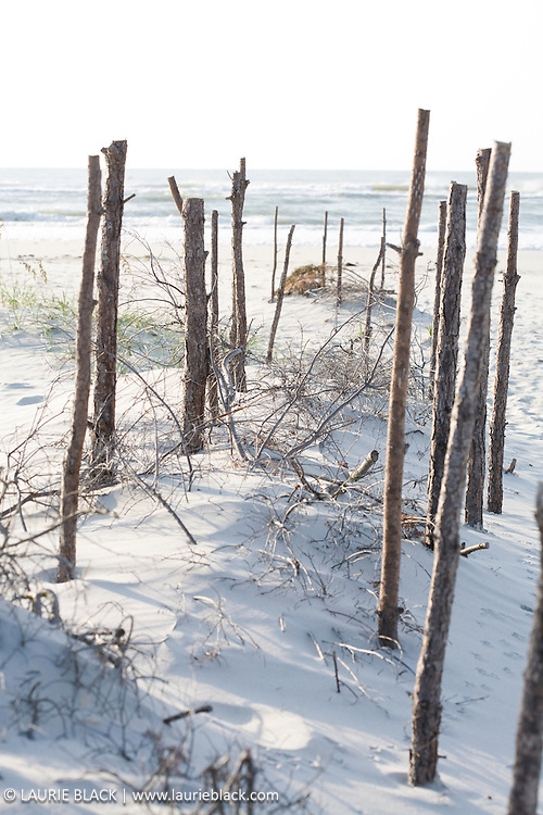 Wood posts in beach sand.