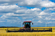 Harvesting wheat with swather and wind turbines in background<br />