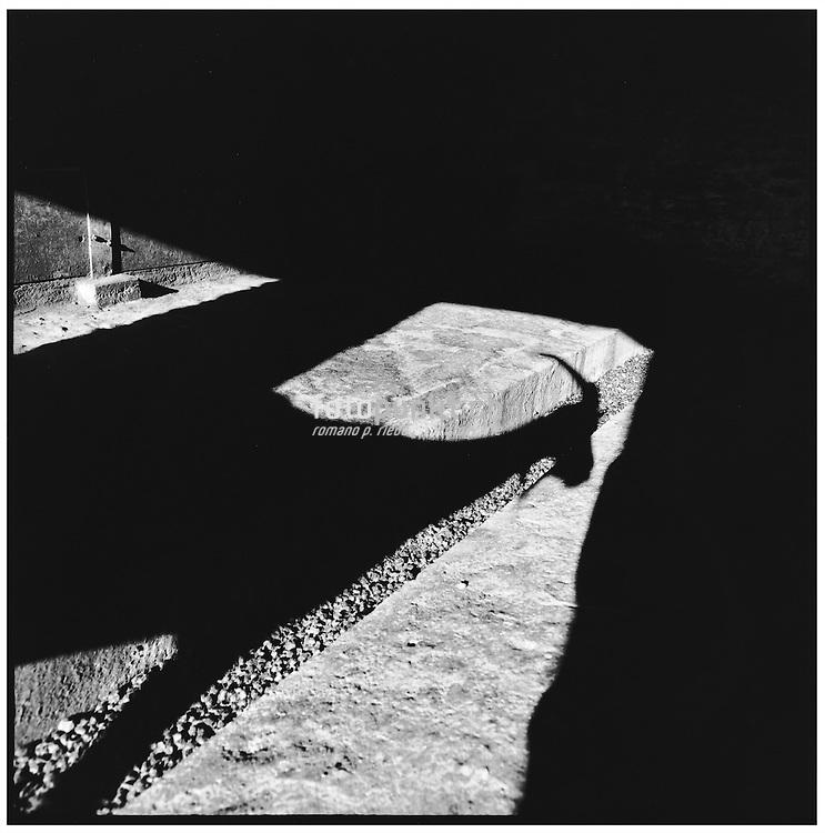 The sun drops a dark shadow of a Nera Verzasca goat to the ground of a cattle shed; der Schatten einer nera Verzasca Ziege im Stall; l'ombre impressionant d'une chè sur le sol de l'écurie