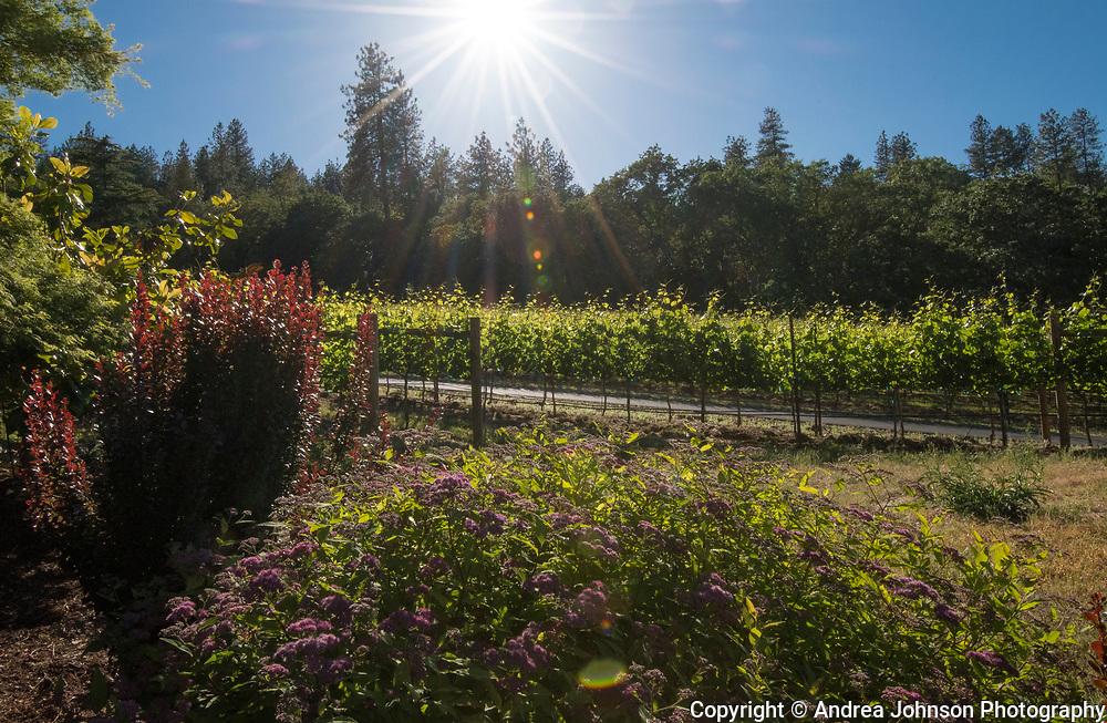 Dancin Vineyards near Jacksonville,  Rogue Valley AVA, Southern Oregon