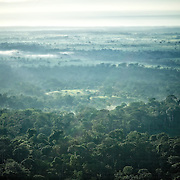 Foret amazonienne.   Floresta da Amazonia.