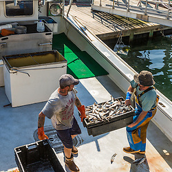 Captain Ryan Post (right) and sternman Geno Holmes loading bait onto the lobster boat 'Tall Tales', at the Spruce Head Fisherman's Co-op in South Thomaston, Maine.