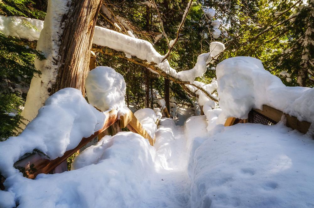 Deep snow at the trail in Tahquamenon Falls State Park, Michigan