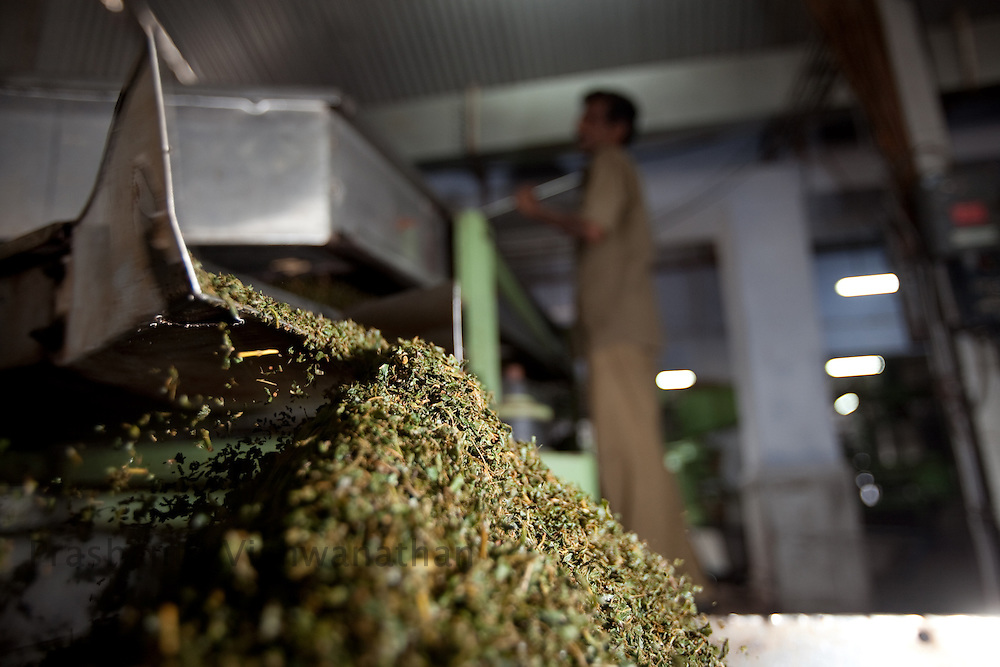 Fermented tea leaves are further processed and transported through conveyor belts inside a tea factory in Conoor, India, on Friday May 21, 2010. Photographer: Prashanth Vishwanathan/Bloomberg News