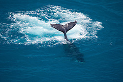 A Humpback whale swims off Talboy's Rocks near Broome.