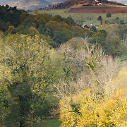Montmorin castle, with trees in the wind in last sunlight. Auvergne Toscany, France