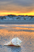 Sunset and shell on Outer Banks beach.