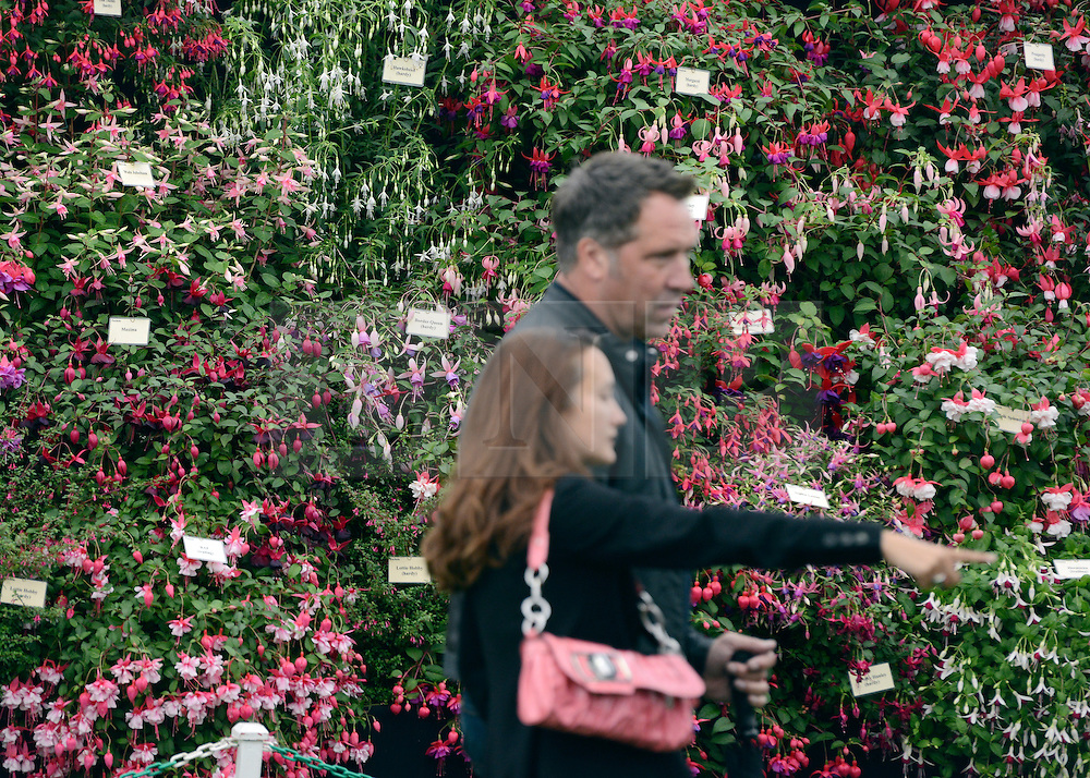 © Licensed to London News Pictures. 02/07/2012. East Molesey, UK A couple walk past a wall of fusias. The RHS Hampton Court Palace Flower Show 2012. The show runs 3-8 July, 2012. Photo credit : Stephen Simpson/LNP