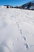 Animal tracks in snow, Iwetemlaykin State Heritage Site, Oregon.