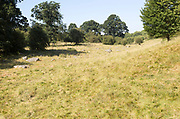Sarsen stones lying in a boulder stream at Lockeridge Dene, near Marlborough, Wiltshire, England, UK