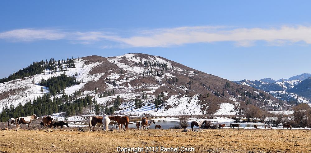 Horses graze at Sun Mountain, in Washington's beautiful Methow Valley.