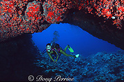 diver swims through coral-encrusted lava arch, Black Sand Arch, Kaupulehu, Kona, Hawaii ( the Big Island), United States ( Central Pacific Ocean ) MR 287
