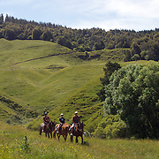Horse trekking with Paradise Valley Ventures Horse Riding near Rotorua.  Paradise Valley Ventures Horse Riding is set on 700 acres of New Zealand pasture, a working farm with sheep and cattle. Paradise Valley, Rotorua, New Zealand.  New Zealand. 10th December 2010. Photo Tim Clayton.