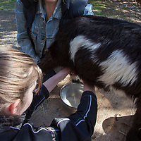 Milking goats and making cheese with Candace and Cachell Coc