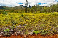 Blue River Provincial Park (Reserve Naturelle de la Riviere Bleue, Province Sud, Grande Terre, New Caledonia