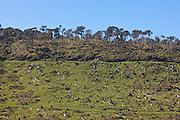deforestation, Catlins, New Zealand