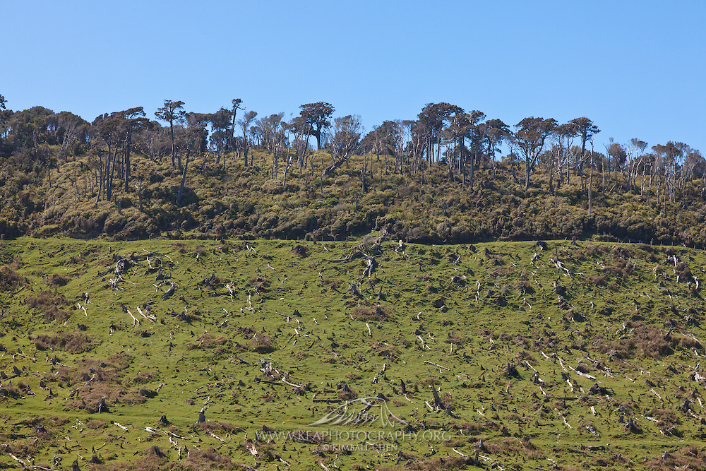 deforestation, Catlins, New Zealand