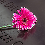 On the 15th anniversary of 9-11 at Ground Zero, flower placed on the memorial plagues  by a loved ones by the name of a family member who died that day.<br /> <br /> The 2,983 names of the victims of the attacks of Sept. 11, 2001, and Feb. 26, 1993, World Trade Center truck bombing are inscribed into bronze parapets surrounding the twin memorial pools.