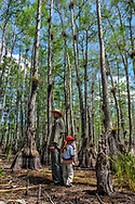 A father and son stand back to back surrounded by tall pond cypress and bromeliad in Big Cypress National Preserve. Model released.