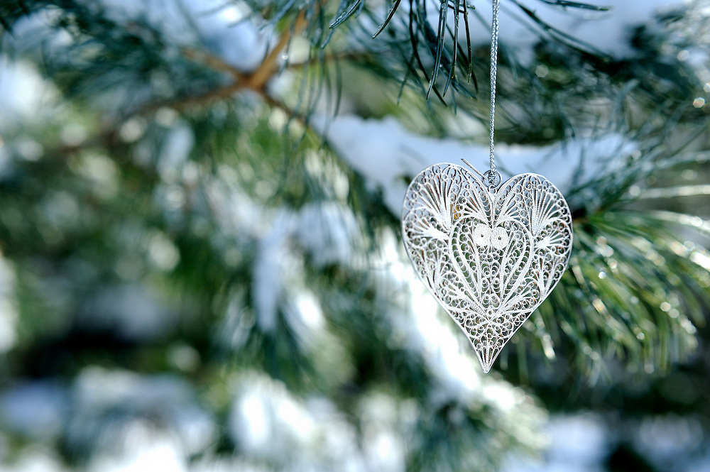 Heart shaped ornament hanging from branch of Austrian pine tree (pinus nigra) in snow with copy space and selective focus