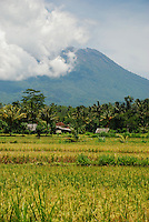 A cloudy Mount Agung as seen across the fields on the fertile western side of the volcano.