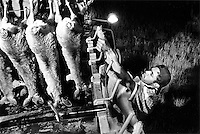 'Kangaroo Harvesting' ..Kangaroos are loaded into the utility of the shooters truck. They cool in the back of the truck after being gutted and their tails cut off and are taken to a meat processing works before their body temperature increases...