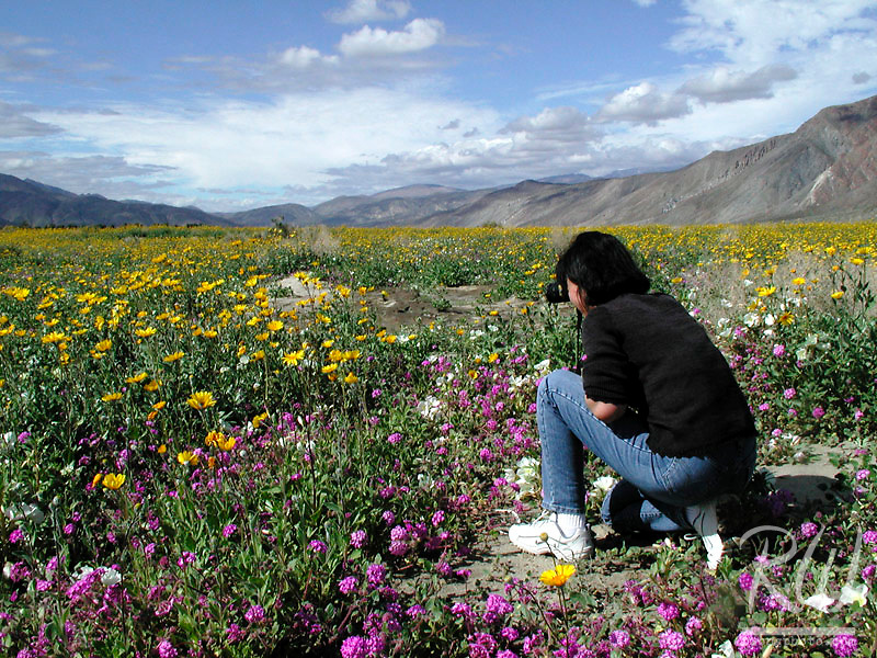 Photographer at Anza Borrego Desert State Park, California