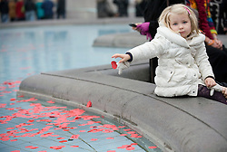 © London News Pictures. 11/11/2011. London, UK. A young girl throws a paper poppy in to the fountains at Trafalgar Square, London today (11/11/2011) before a 2 minute silence at a Remembrance day ceremony. Photo Credit : Ben Cawthra/LNP