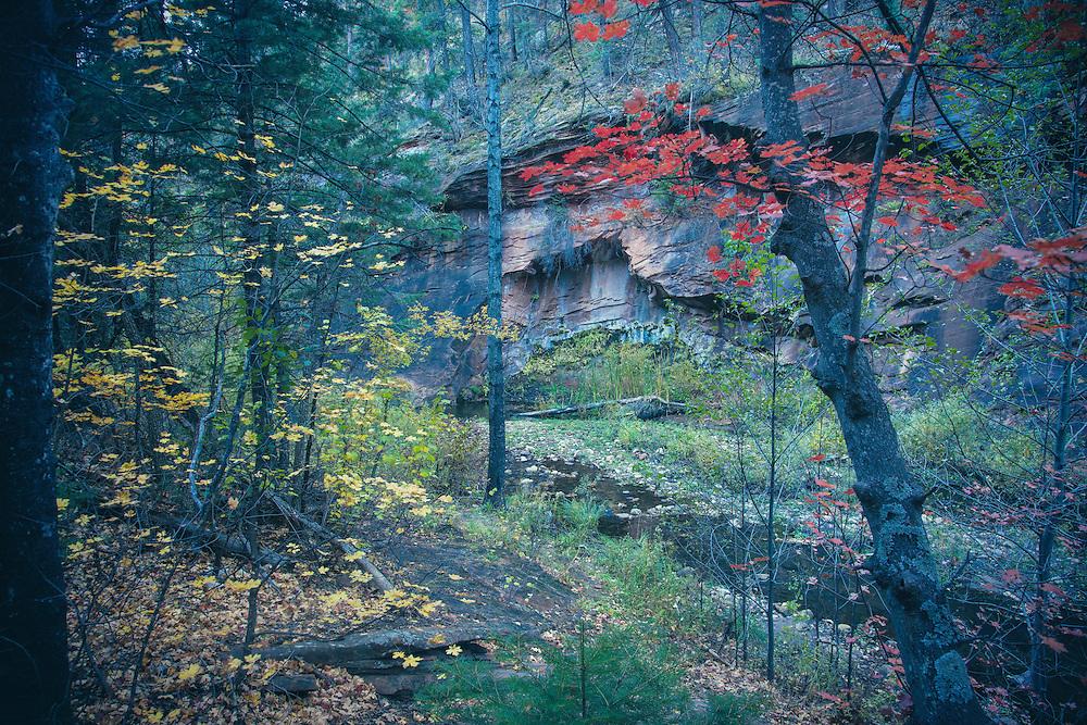 Fall in West Fork, Oak Creek Canyon