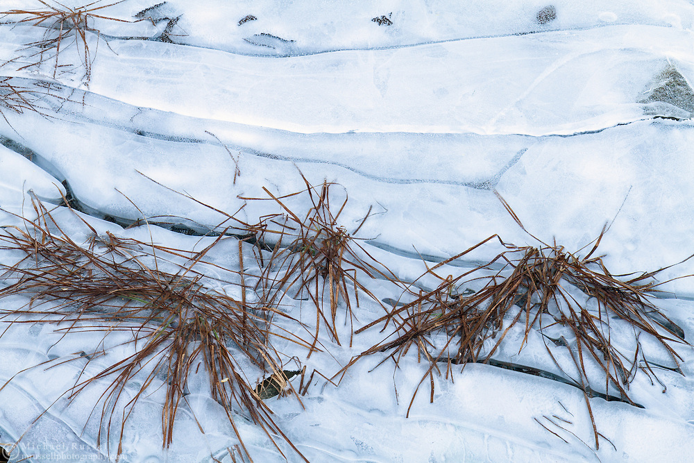 Shoreline plants caught in the ice at Silver Lake in Silver Lake Provincial Park near Hope, British Columbia, Canada