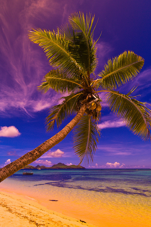 Palm tree, Tokoriki Island Resort, Fiji Islands