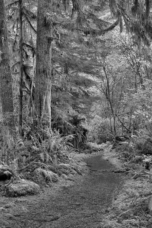 Sweet Creek Falls Canopy Trail - Mapleton, Oregon - HDR - Infrared Black & White