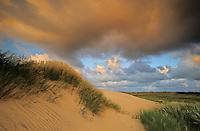 Drifting sand dune, Lodbjerg Dune Plantation - National Park Thy, Denmark