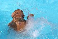 Chemka Dog Swim 2012