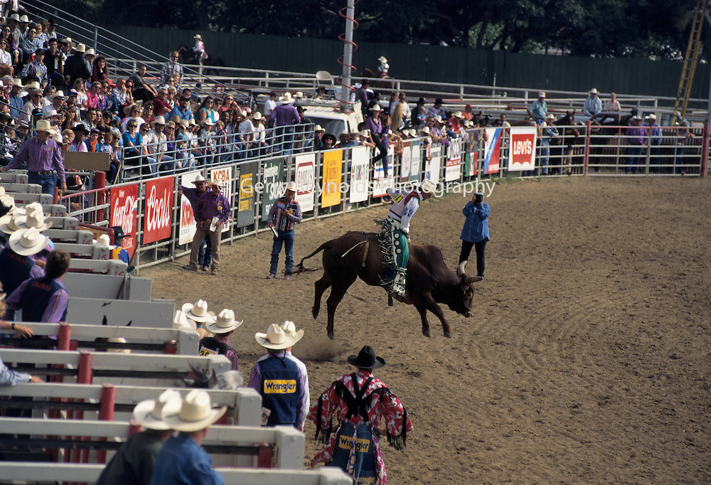 Clown, Rodeo Clown, Bull Riding, Bucking Bull, Salinas Rodeo, Salinas, California