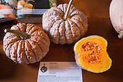 "A variety of winter squash at Culinary Breeding Network's ""Squash Party"""