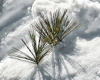 Winter part II. Pine needles peaking up from the snow. Image taken with a Nikon D300 camera and 18-200 mm VR lens (ISO 200, 200 mm, f/9, 1/800 sec).