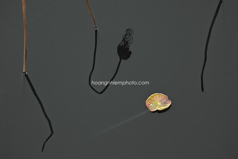Vietnam Images-lotus-zen-meditation-nature-hoa sen -Hoàng thế Nhiệm