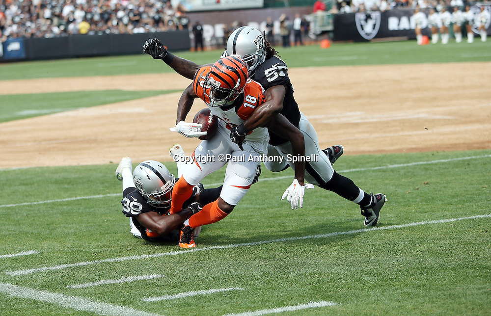 Cincinnati Bengals wide receiver A.J. Green (18) gets gang tackled by Oakland Raiders outside linebacker Ray-Ray Armstrong (57) and Oakland Raiders cornerback TJ Carrie (38) after catching a second quarter pass during the 2015 NFL week 1 regular season football game against the Oakland Raiders on Sunday, Sept. 13, 2015 in Oakland, Calif. The Bengals won the game 33-13. (©Paul Anthony Spinelli)