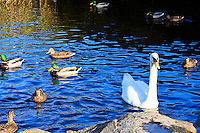 Animals, Birds, water.<br />
