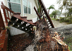 A fallen tree rests on a home in the Castaways on the River as Hurricane Matthew blows into Astor on Friday, October 7, 2016. (Stephen M. Dowell/Orlando Sentinel/TNS/ABACAPRESS.COMTallahassee