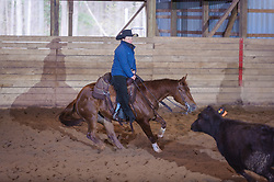 April 30 2017 - Minshall Farm Cutting 2, held at Minshall Farms, Hillsburgh Ontario. The event was put on by the Ontario Cutting Horse Association. Riding in the 1,000 Amateur Class is Katie Leung on Dual Peps Tom Cat owned by the rider.
